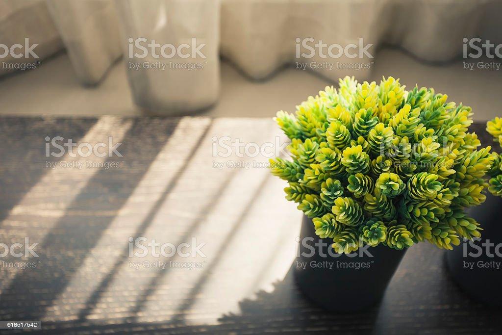 Home interior Green plant morning light Shadow window curtain stock photo