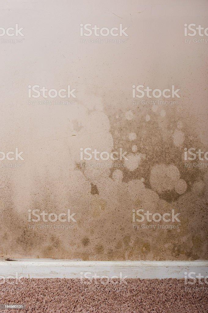 Home interior Mold royalty-free stock photo