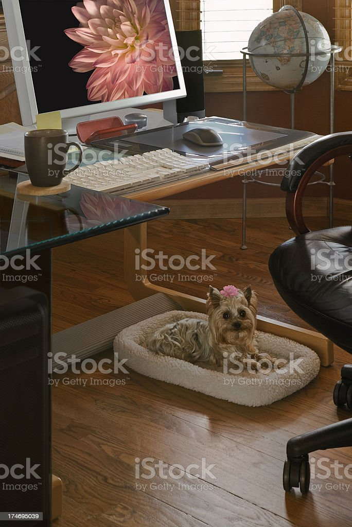 Home Office Companion royalty-free stock photo