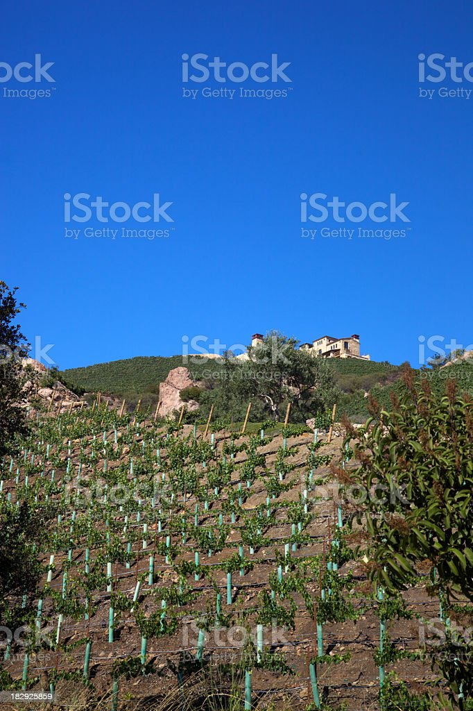 Home on a Hillside of Grape Vines stock photo