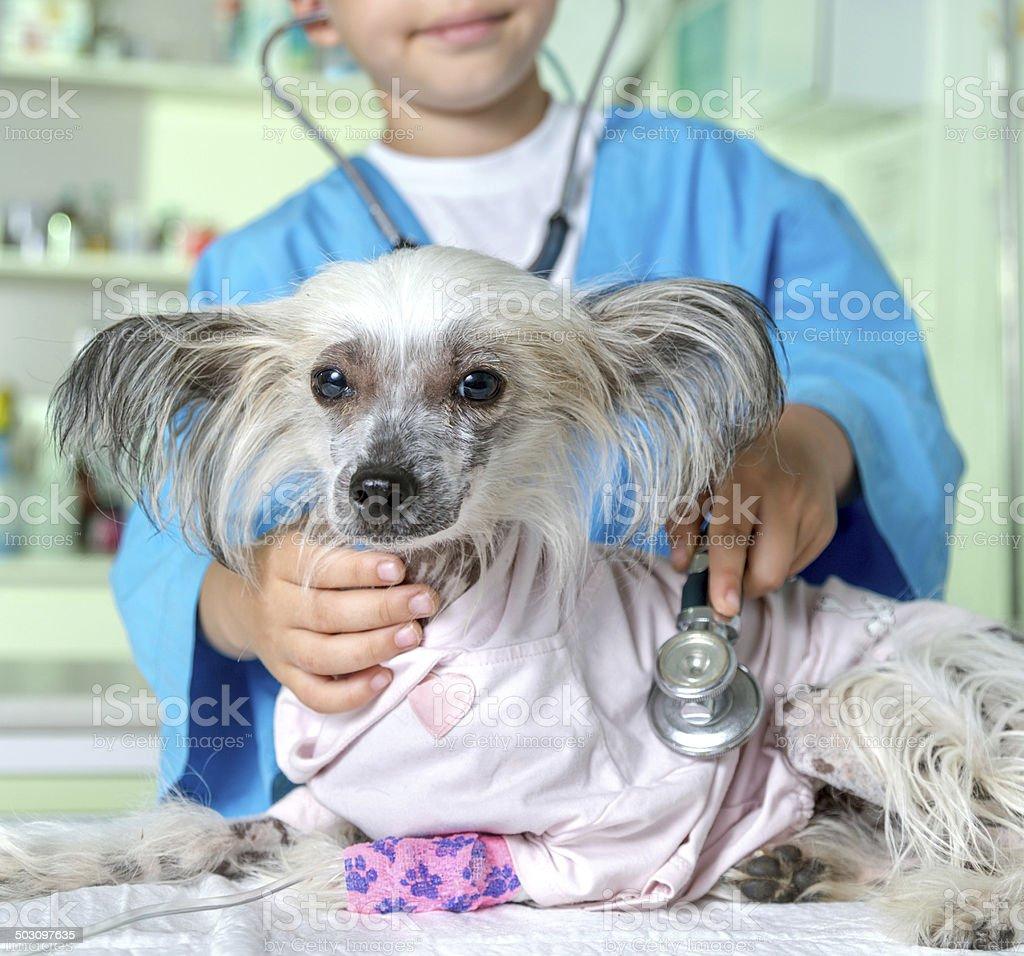 Home pet on veterinary examination royalty-free stock photo