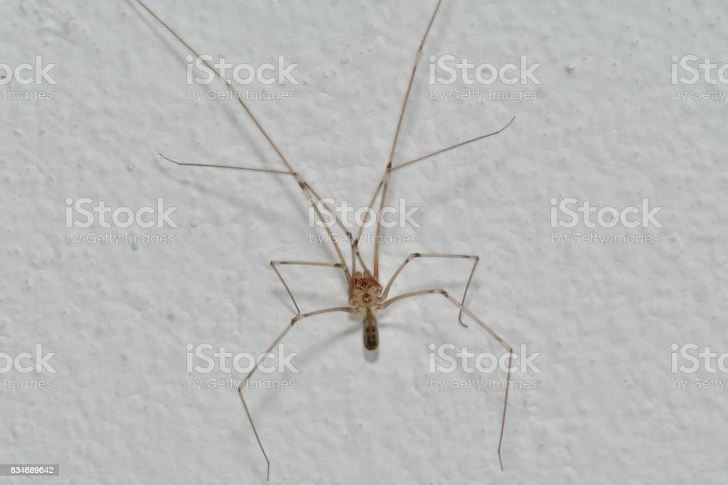 home spider stock photo