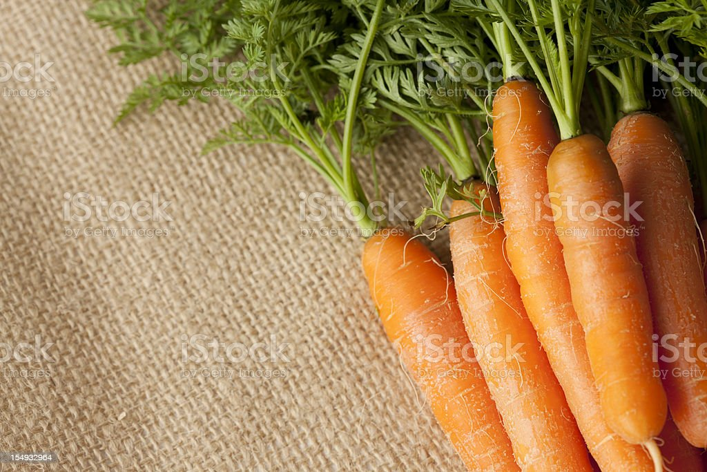 Homegrown Carrots on Burlap Background royalty-free stock photo
