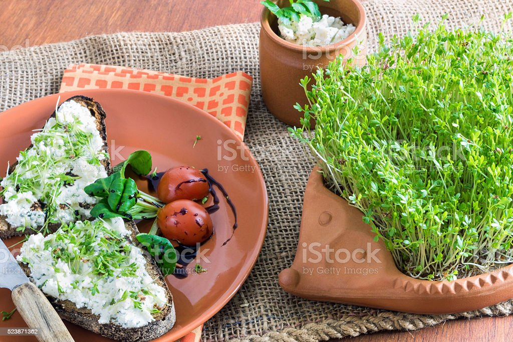 home-grown garden cress as healthy vitamin supplier stock photo
