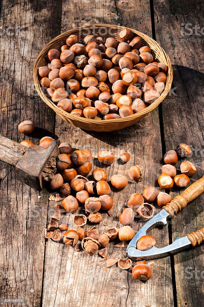 Homegrown hazelnuts stock photo