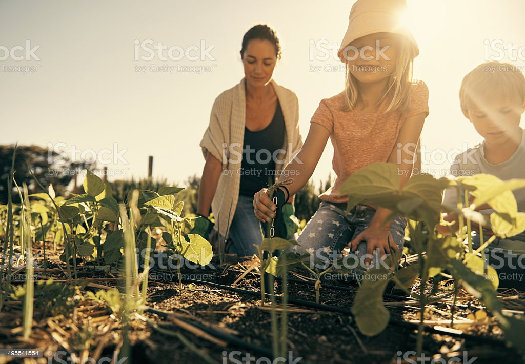 Homegrown is healthiest stock photo