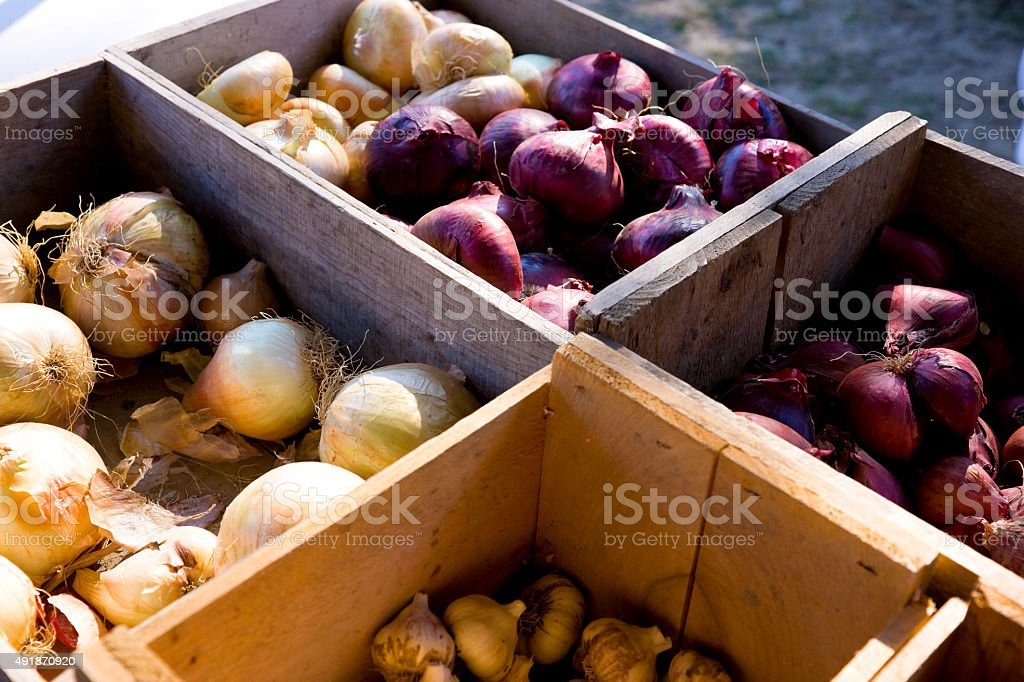 Homegrown onions at fall farmers market stock photo