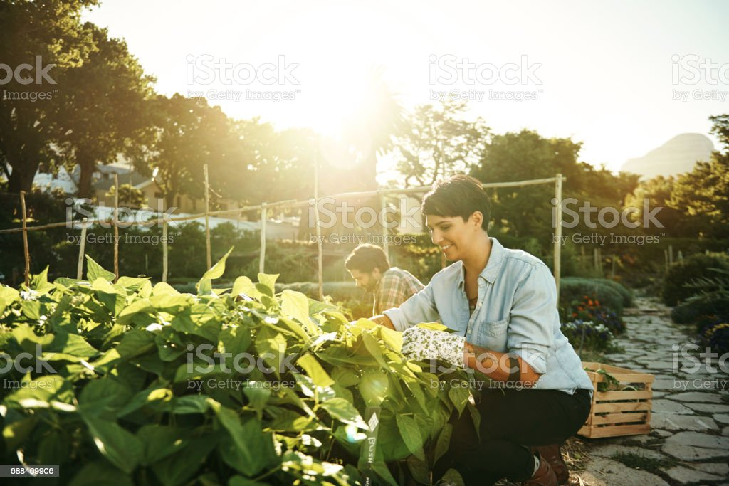 Homegrown tastes much better stock photo