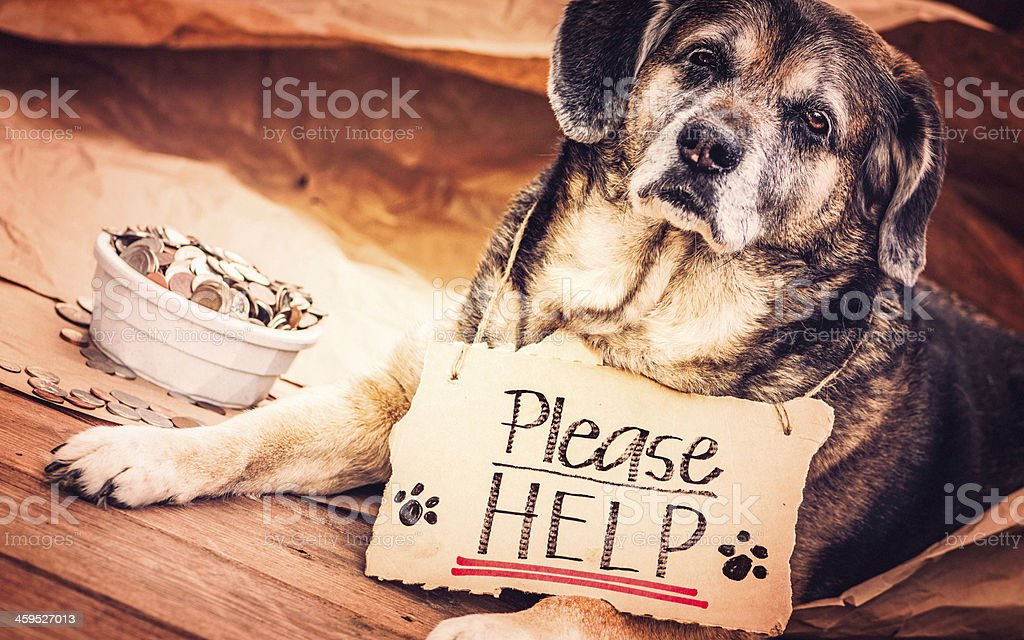 Homeless and Hungry Dog Begging for Help stock photo