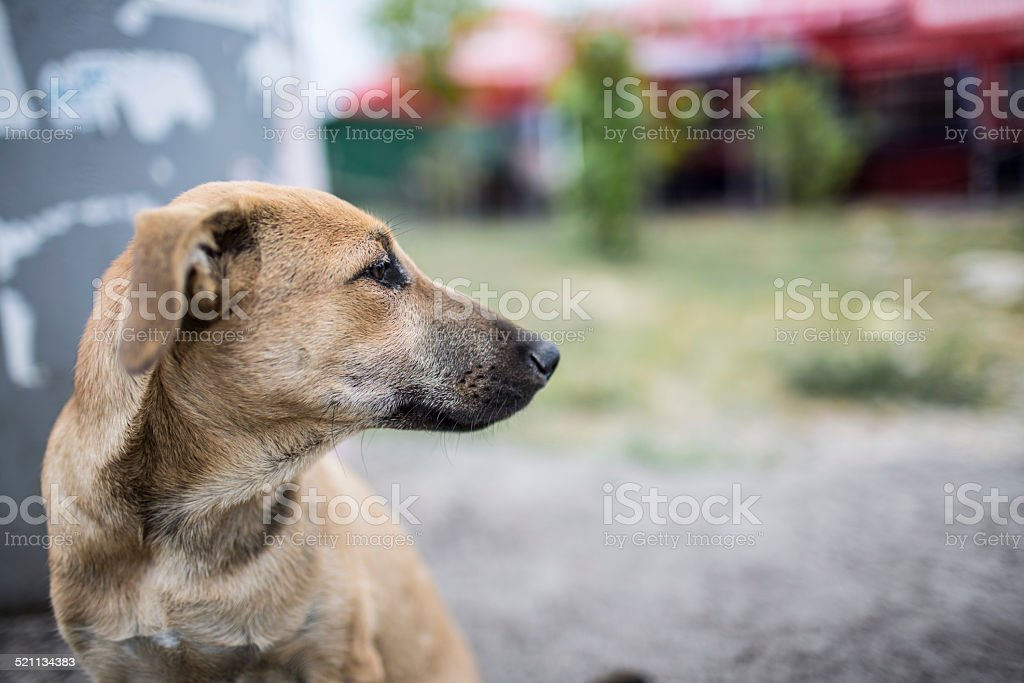 Homeless and hungry dog stock photo