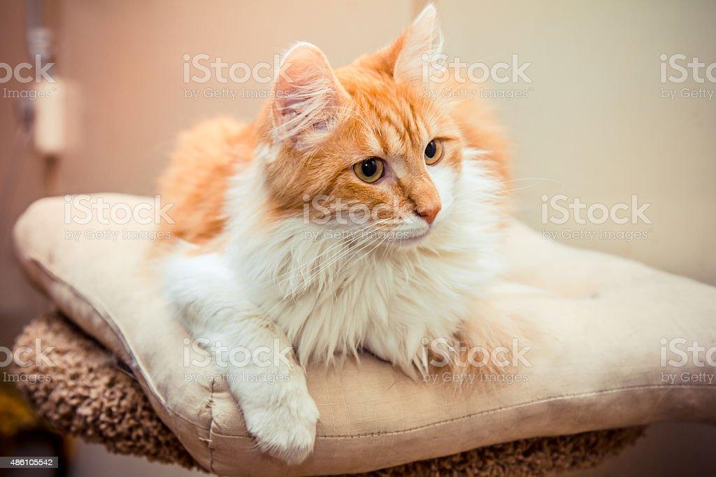 Homeless cat in animal shelter stock photo