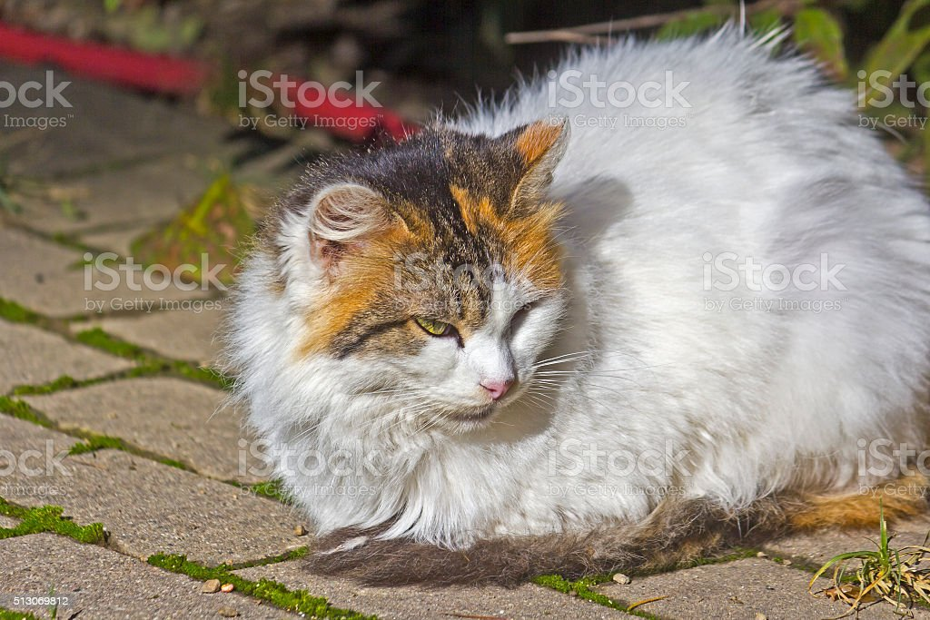 Homeless cat, Sochi stock photo