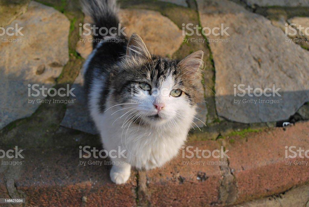 homeless cat1 stock photo