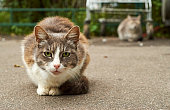 Homeless cats in the street