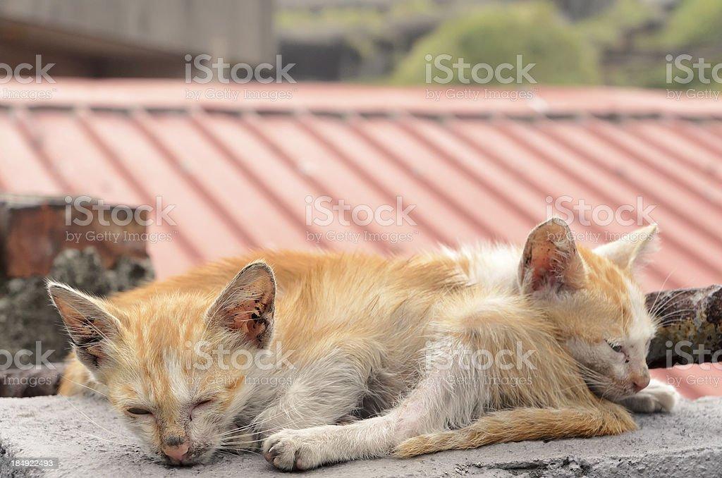 Homeless cats royalty-free stock photo