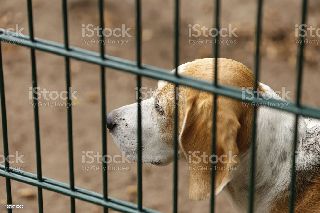 Homeless dog behind bars in a shelter stock photo
