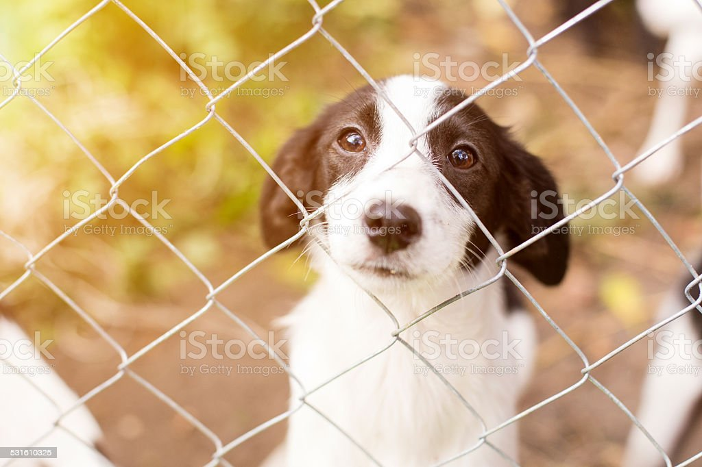 Homeless dog behind bars stock photo