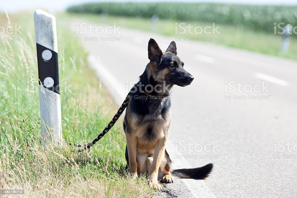 homeless dog leave alone on streetside waiting for animal shelter stock photo
