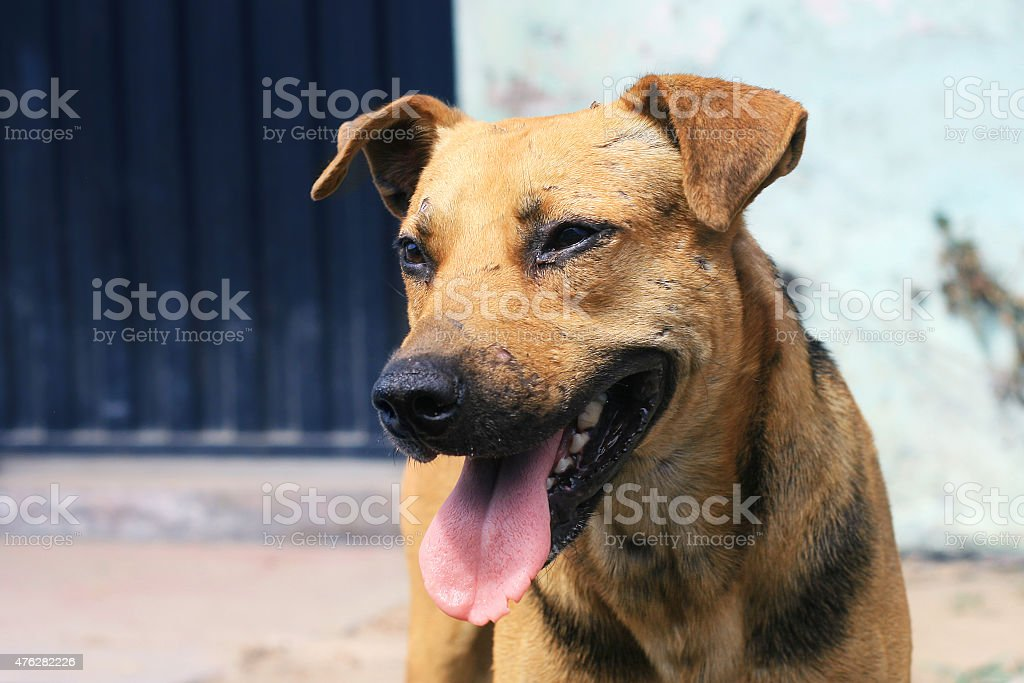 Homeless dog stock photo