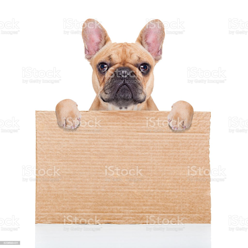 homeless dog stock photo