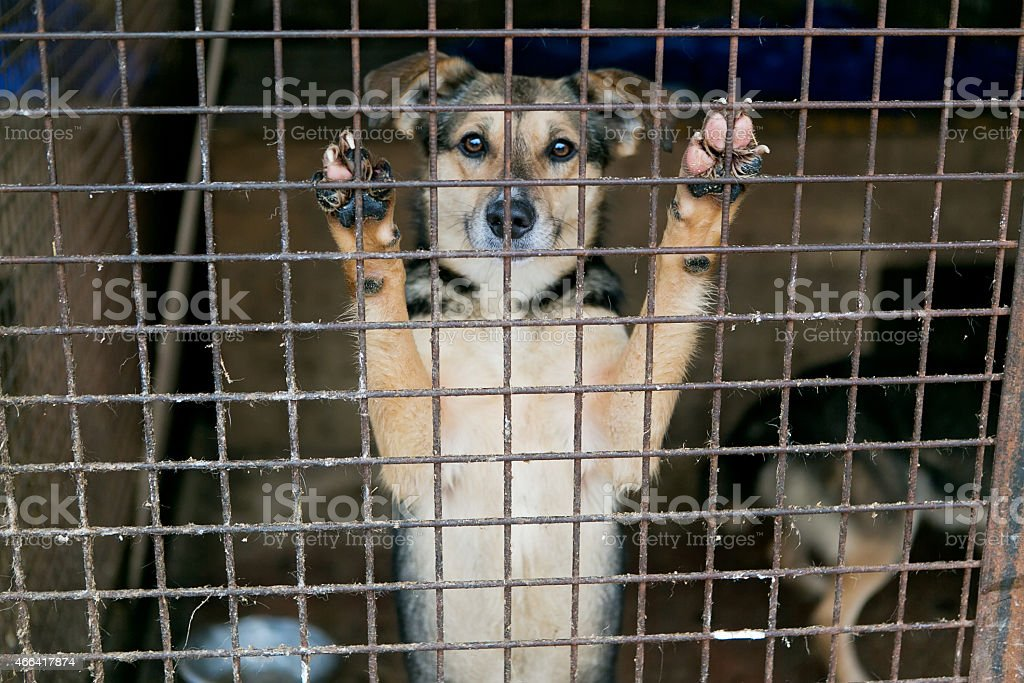 Homeless dog waiting for a new owner in the shelter stock photo