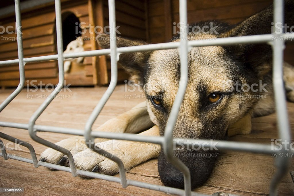 Homeless dog waiting for adoption royalty-free stock photo