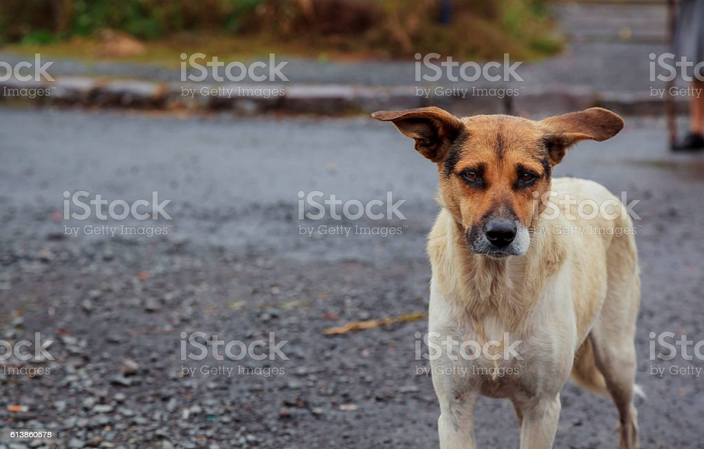 homeless dogs Positive stray dog walking on stock photo