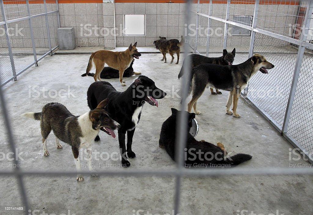 Homeless dogs shelter stock photo