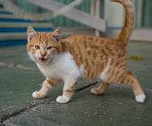 Homeless kitten hisses being on outdoors