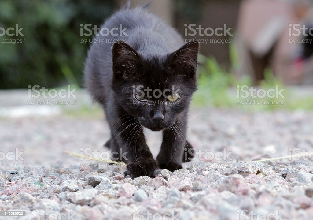 homeless kitten infected with feline herpesvirus or chlamydiosis stock photo