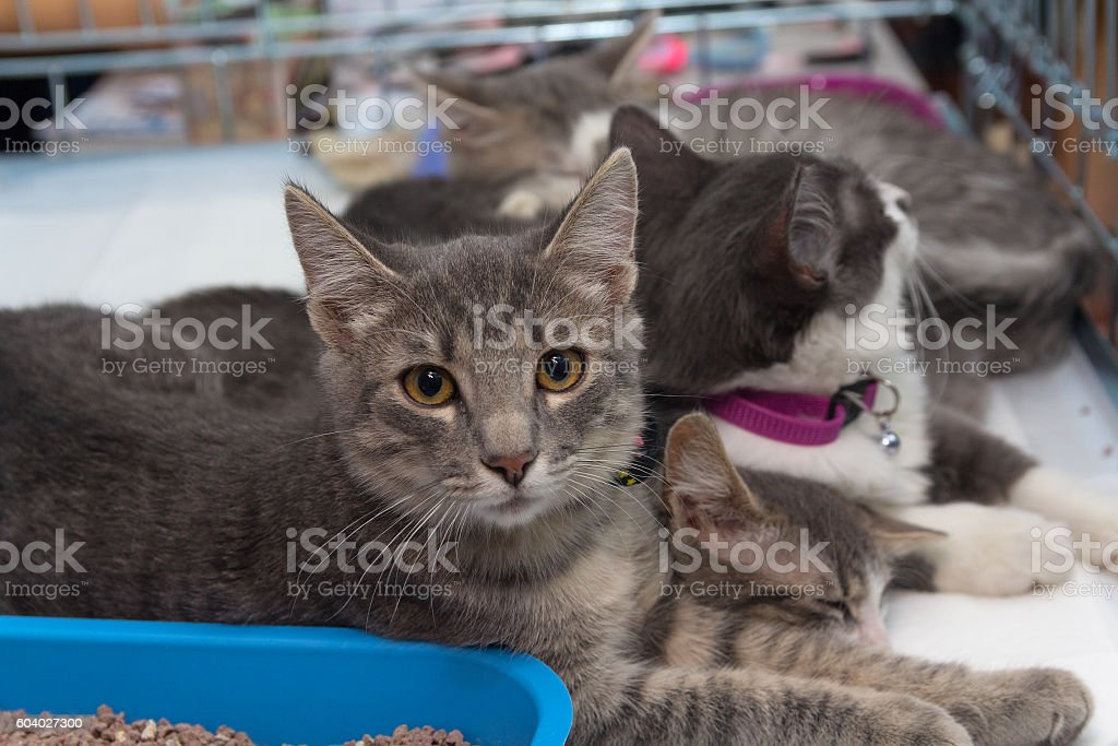 Homeless kittens in a cage at the shelter. Pets stock photo