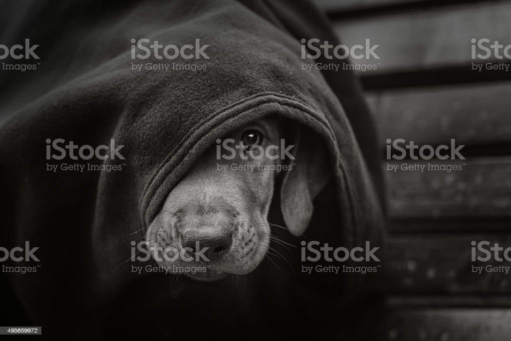 Homeless little puppy stock photo