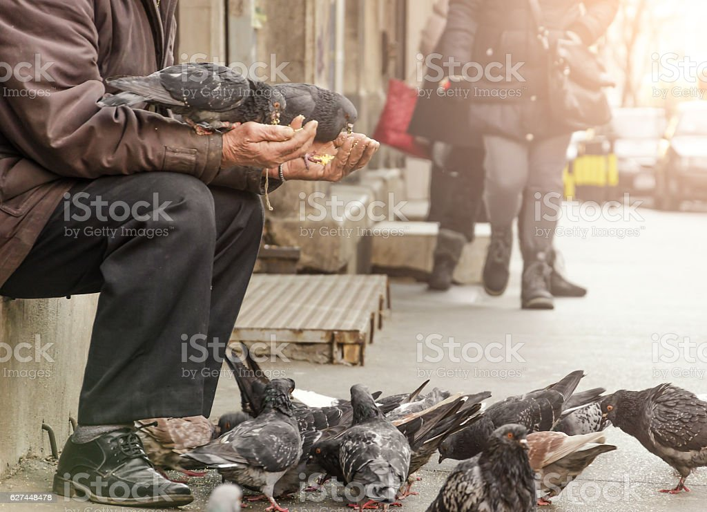 homeless man sitting on the street and feed the pigeons stock photo