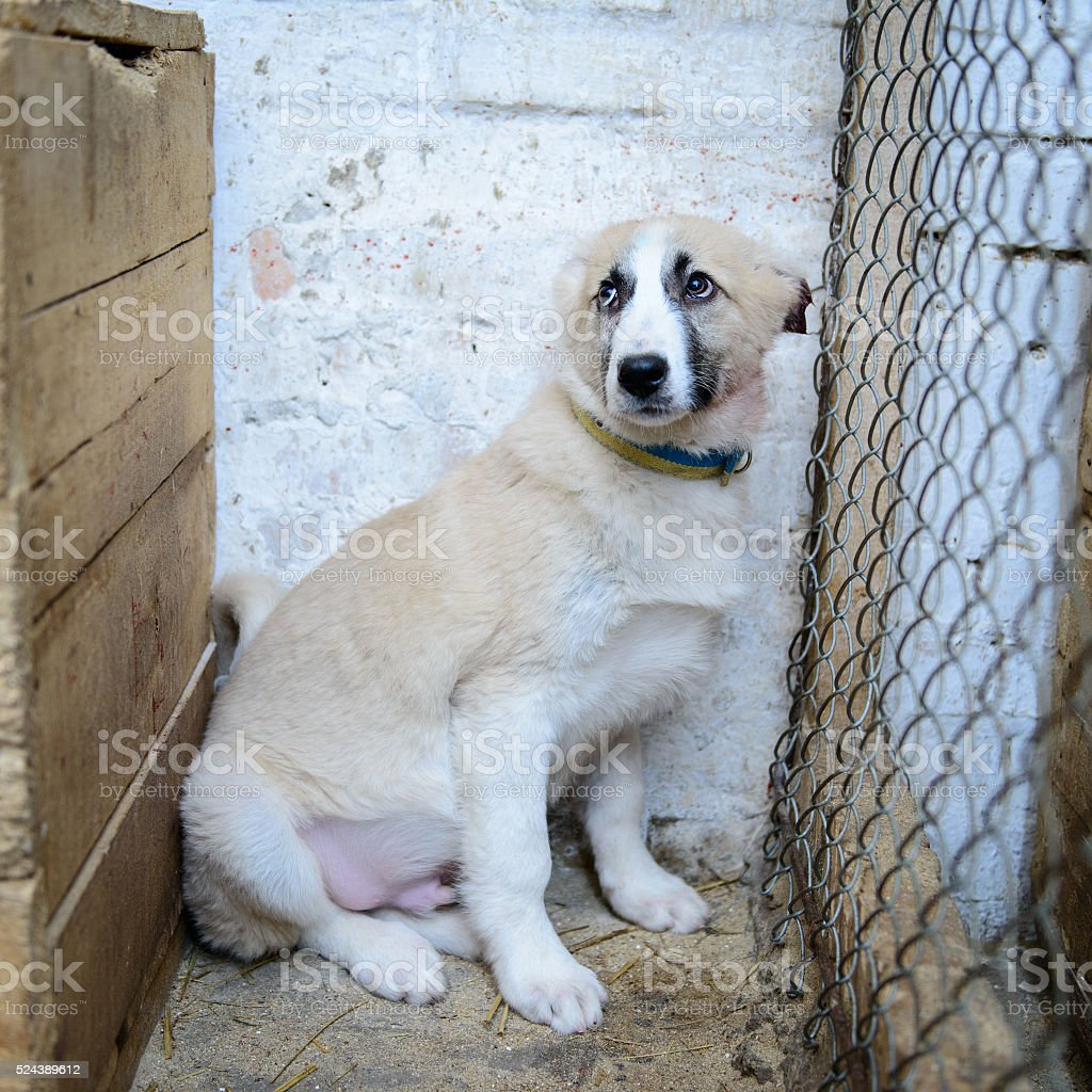homeless puppy in shelter stock photo