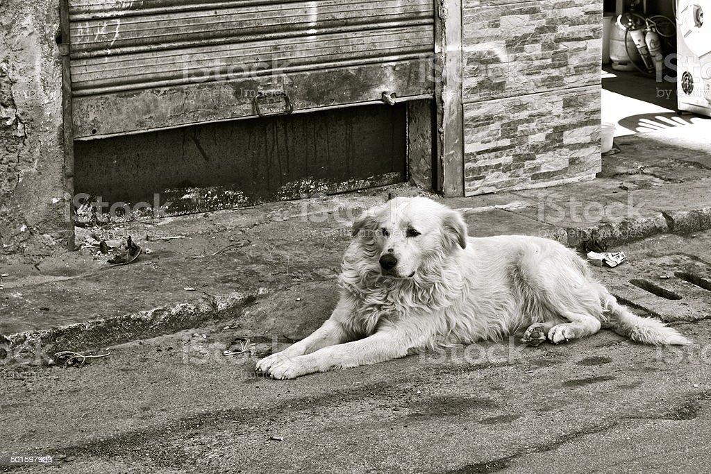 Homeless Stray Dog in Palermo, Italy stock photo