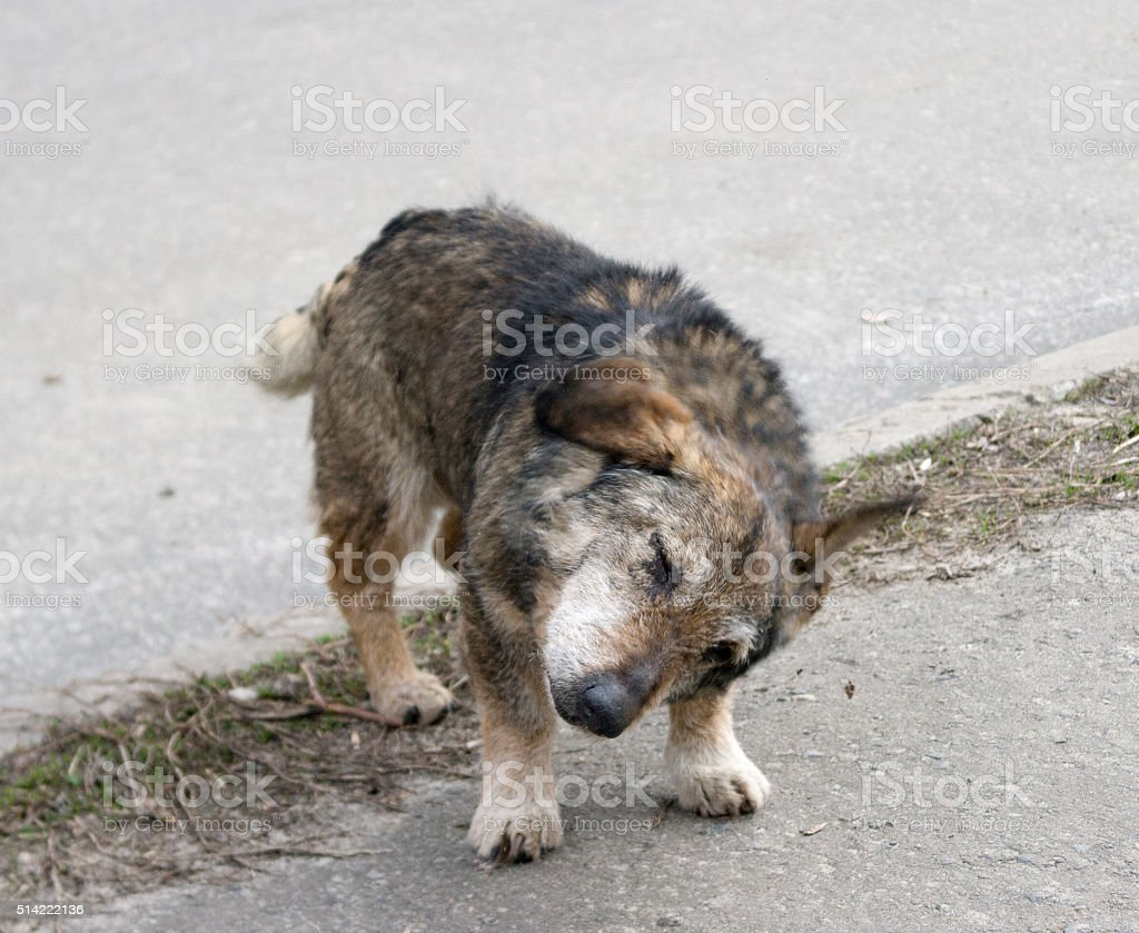 Homeless stray dog on the background of asphalt stock photo
