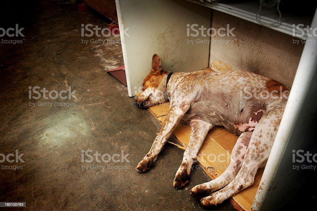 Homeless Stray stock photo