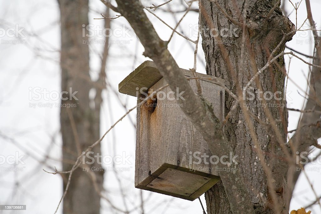 Homemade Birdhouse royalty-free stock photo