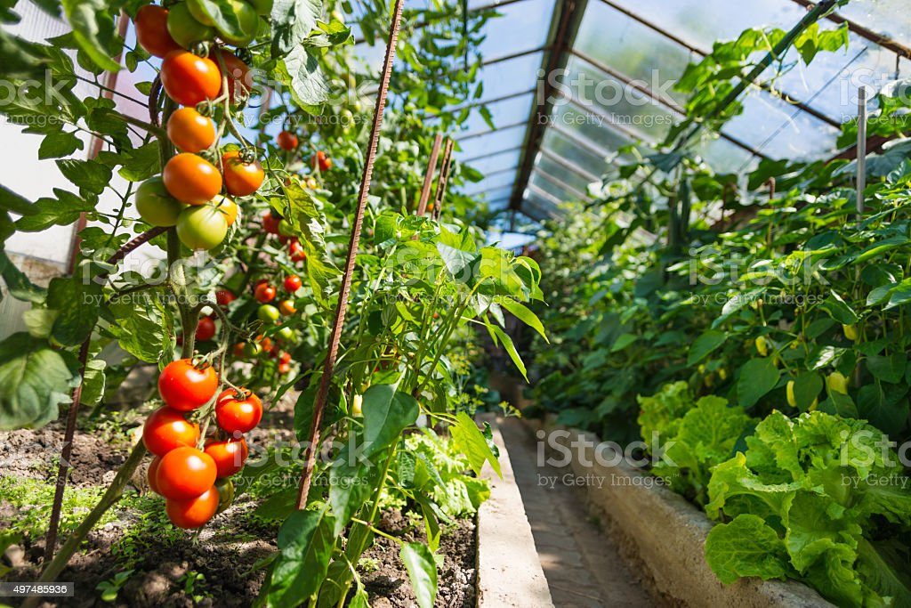 Homemade greenhouse with plants stock photo