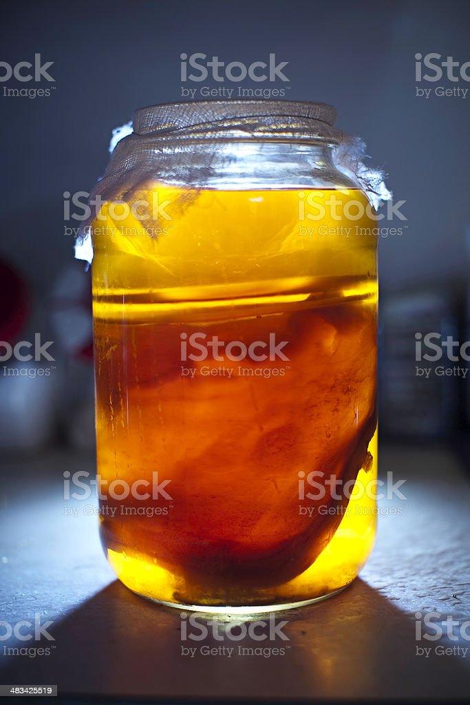 Homemade Kombucha Tea royalty-free stock photo