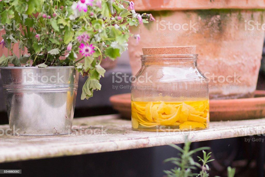 homemade limoncello stock photo