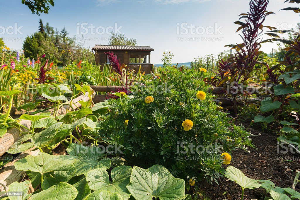 Homemade summer garden with wooden chalet stock photo