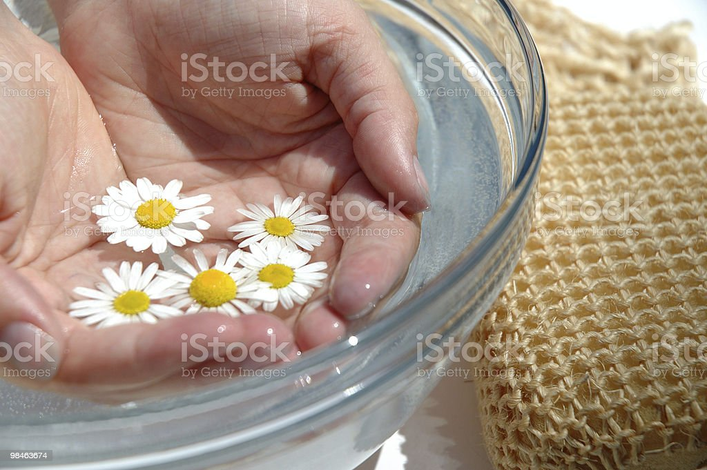 Homeopathic medicine, chamoline hands royalty-free stock photo