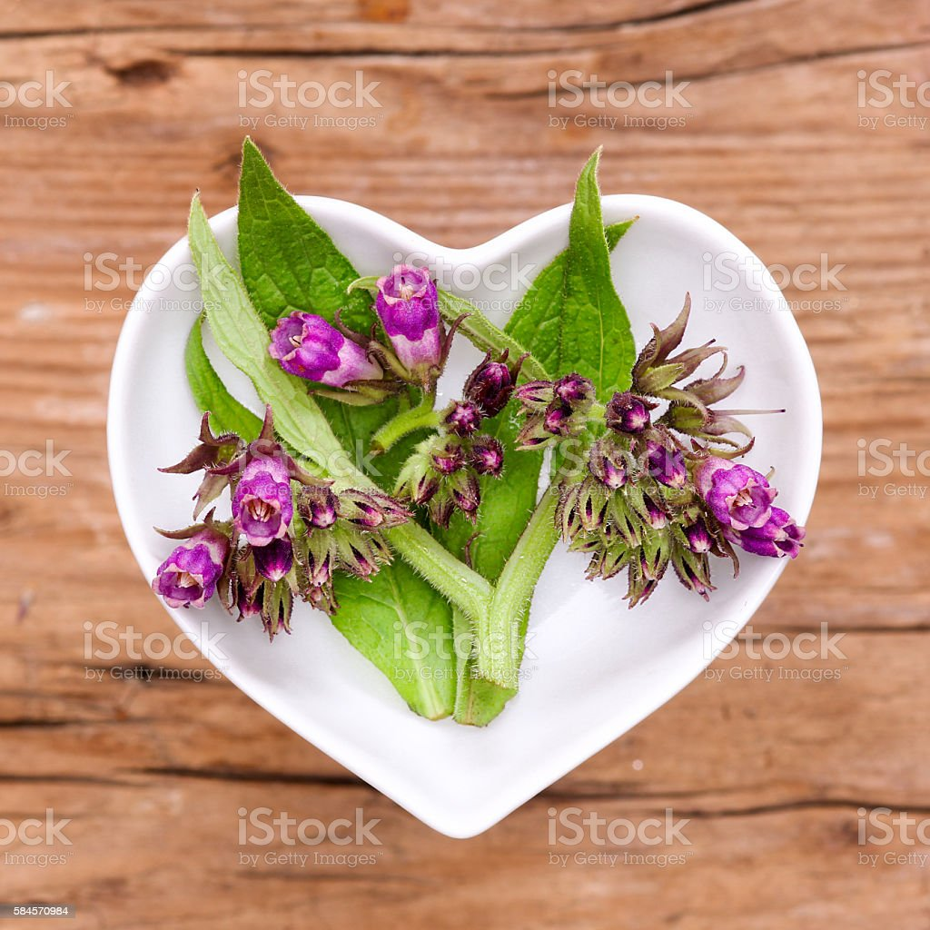 Homeopathy and cooking with comfrey stock photo