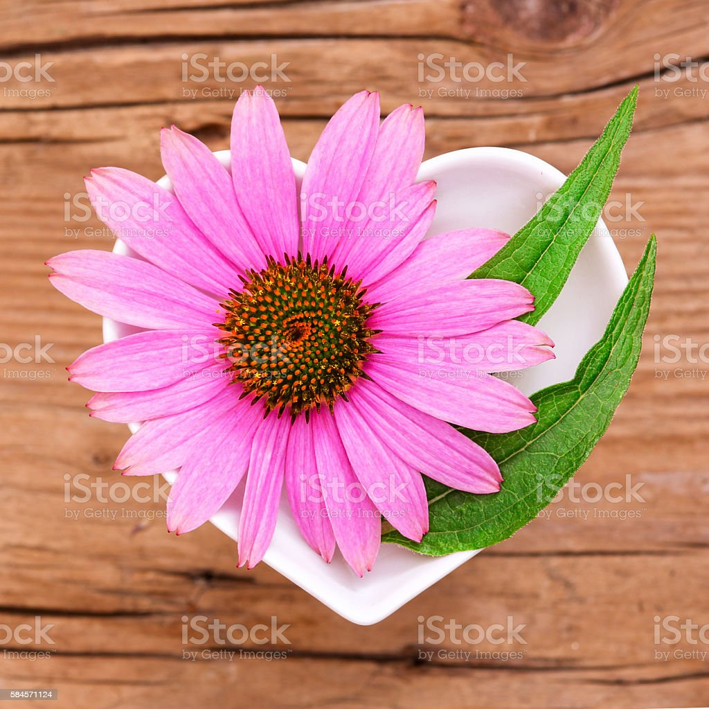 Homeopathy and cooking with echinacea stock photo