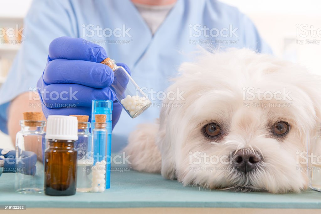 Homeopathy for a dog stock photo