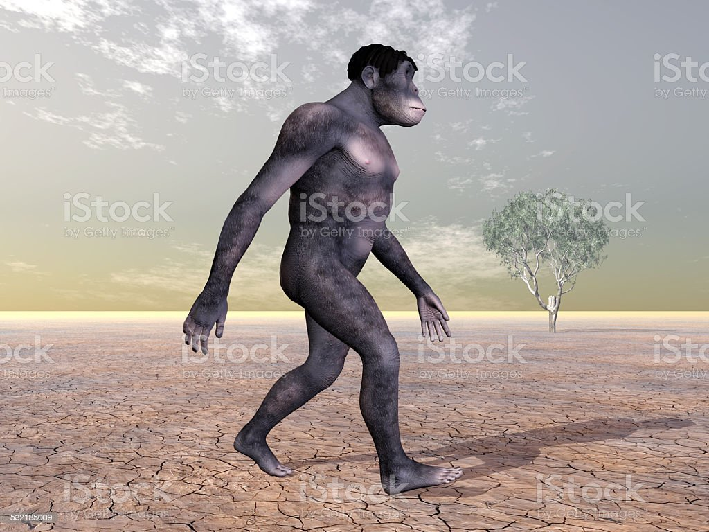 Homo Habilis - Human Evolution stock photo