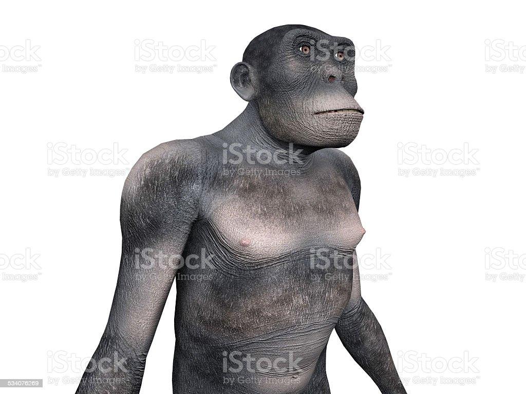 Homo Habilis - Human Evolution stock photo