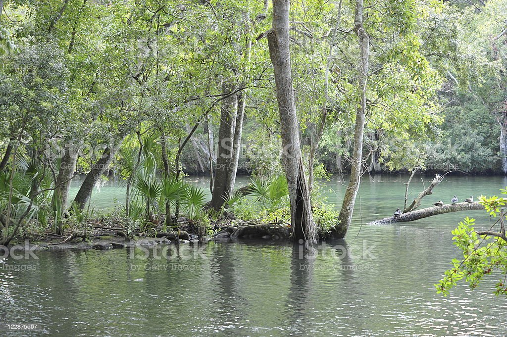 Homosassa Wildlife State Park, Florida stock photo