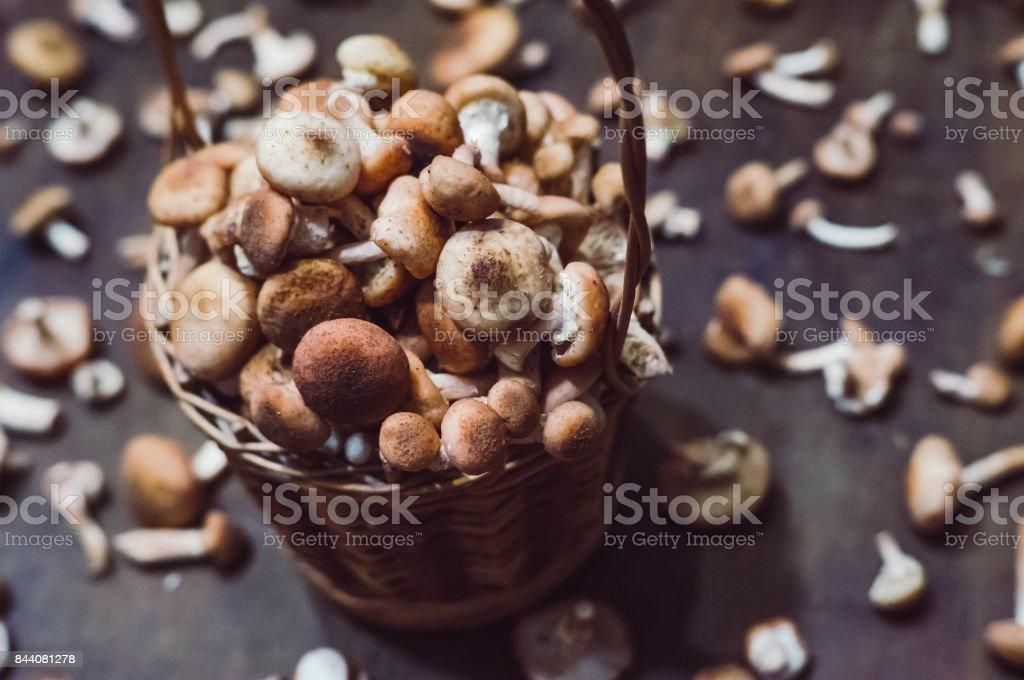 Honey agarics in a basket stock photo